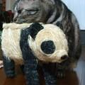 だれ?パンダだよ。