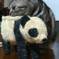 Photos: だれ?パンダだよ。