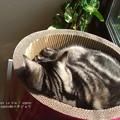 Photos: ガリガリサークルは爪研ぎか。はたまたベッドか。