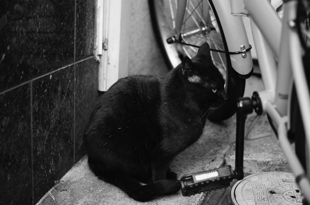【可哀想な猫の最期の一枚】