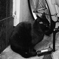 Photos: 【可哀想な猫の最期の一枚】