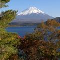 写真: 冬紅葉美人はやはり本栖富士