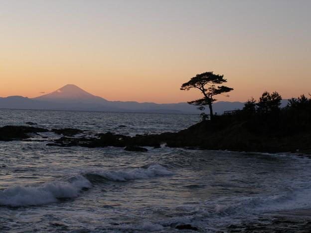 Photos: 夕富士や松をみながら暮れ待つ