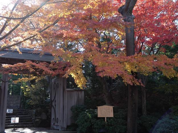 写真: 名残の冬紅葉