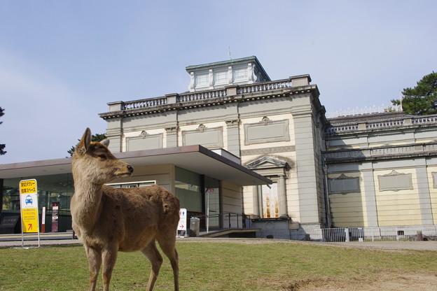 写真: 奈良国立博物館