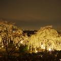 写真: 宇治の町と桜