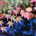Photos: 紅葉はじまり~