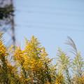 Photos: 秋風。。