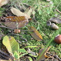 Photos: 小さい秋・・・みつけたよ。。