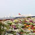 横浜の春-2