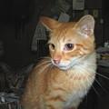 写真: 2005年8月24日のボクチン(1歳)
