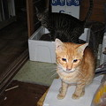 Photos: 2005年10月27日のボクチン1歳