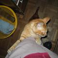 写真: 2005年10月27日のボクチン1歳
