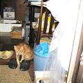 Photos: 2005年11月27日のボクチン(1歳)