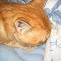写真: 2005年12月21日のボクチン(1歳)