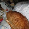 写真: 2005年12月23日のボクチン(1歳)