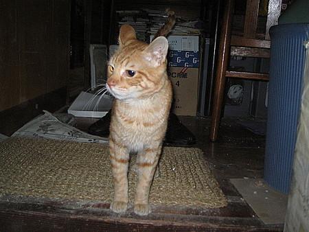 2006年3月28日のボクチン(1歳半)