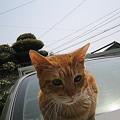 Photos: 2006年3月28日のボクチン(1歳半)