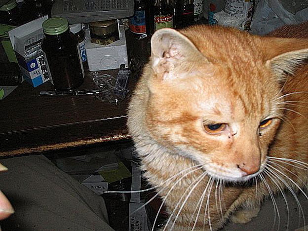 写真: 2006年4月3日のボクチン(1歳半)