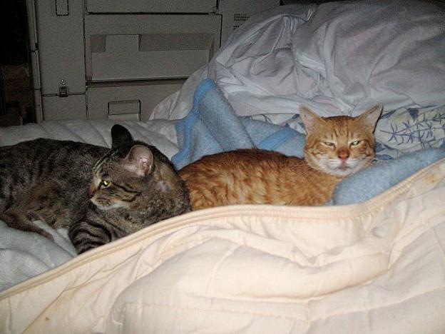 写真: 2006年6月22日のボクチン(2歳)