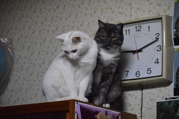 写真: シロちゃんとクロちゃん
