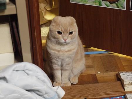 いつも憂い顔のスコちゃん