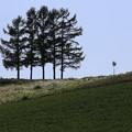 Photos: 丘に佇む五本松。(1)