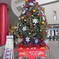 函館駅クリスマスツリー5