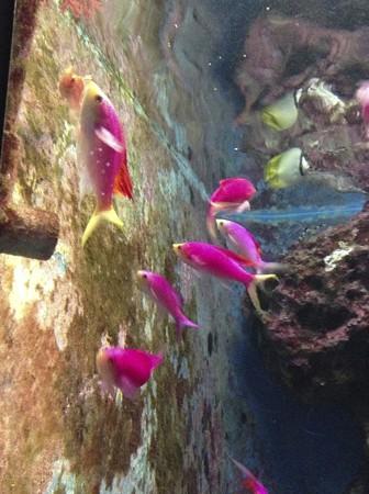 1301-美ら海水族館4