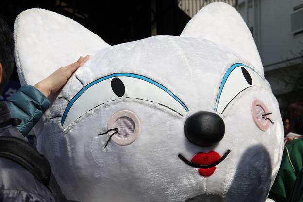 白猫ヤマト