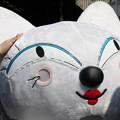 Photos: 白猫ヤマト