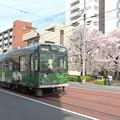 Photos: 嵐電と桜