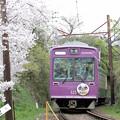 3年目の桜のトンネル