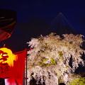 「一重白彼岸枝垂桜」