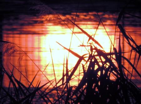 夕陽の映り込み