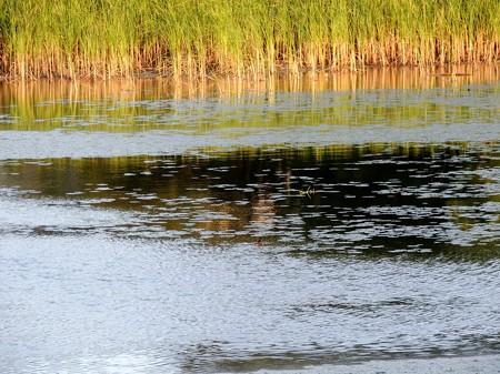 八ッ谷池夕景