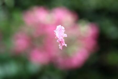 花は散りても花らしく~~