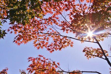 牧歌の里紅葉