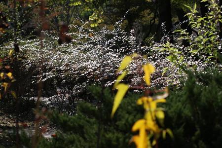 生垣の輝き