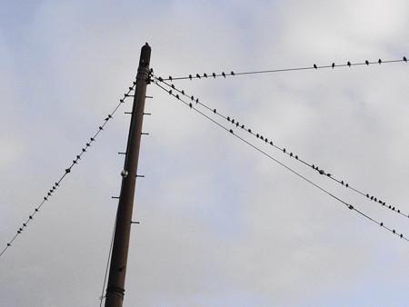 雀の電線学校