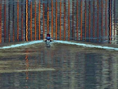 八ッ谷池のバン