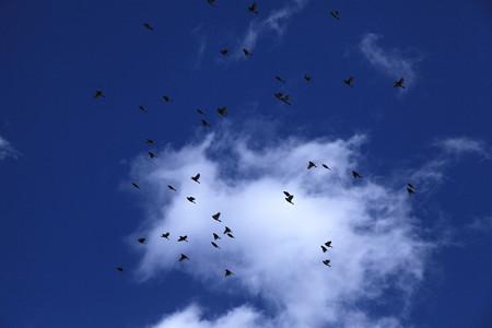 雀の編隊飛行