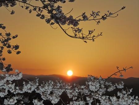 日の出と桜