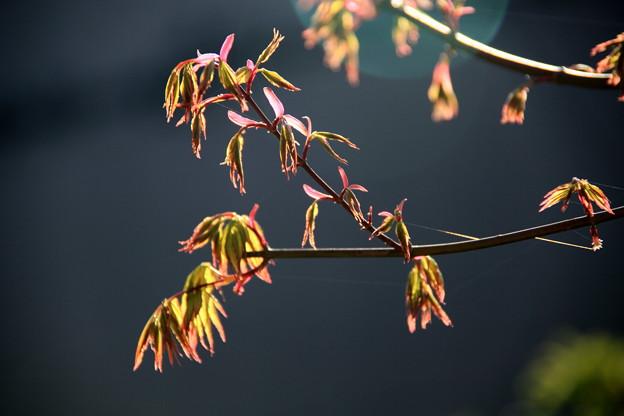 春紅葉~~