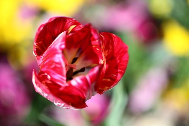 春色に囲まれて主役は・・・わたし♪~♪