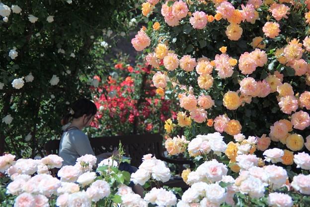 蔓薔薇を描く女性