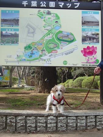 千葉公園にて