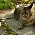 Photos: 秋猫
