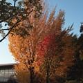 武蔵野の落日