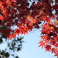 木陰の中に紅葉